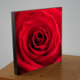Rode roos - WANDBORD